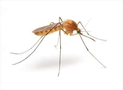 Sfaturi preventie infestare cu tantari