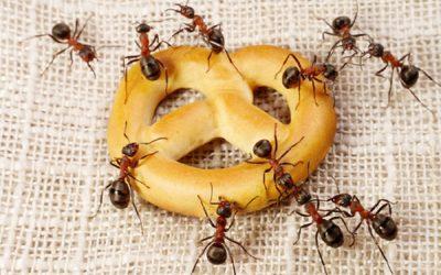 Cum-scăpați-de-furnicile-din-casă-pentru-totdeauna1